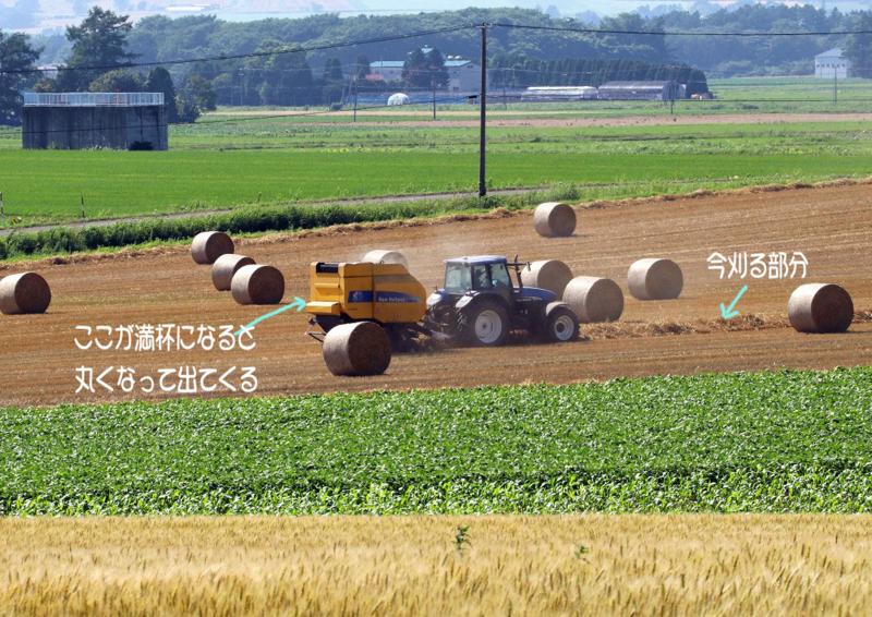 牧草の収穫5