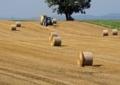 牧草の収穫4