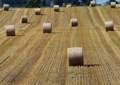 牧草の収穫3