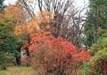 庭の紅葉13