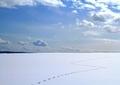 北海道冬風景13