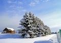 北海道冬風景11