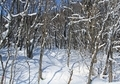 北海道冬風景6