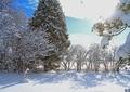 北海道冬風景5