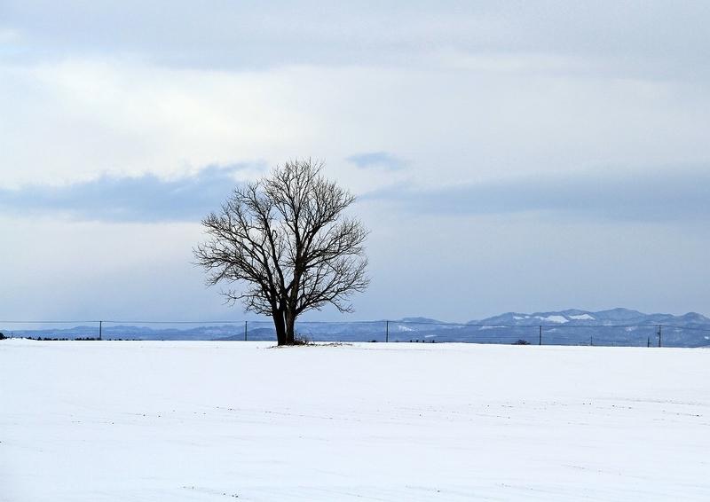 12月の風景3