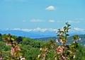 雪山が見て花見