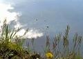アメンボウの池3