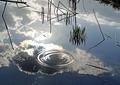 アメンボウの池2