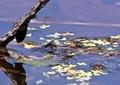 アメンボウの池1