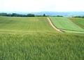 農村風景山8