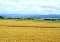 農村風景山7