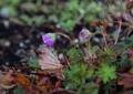 晩秋の植物