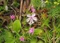 小さい花1