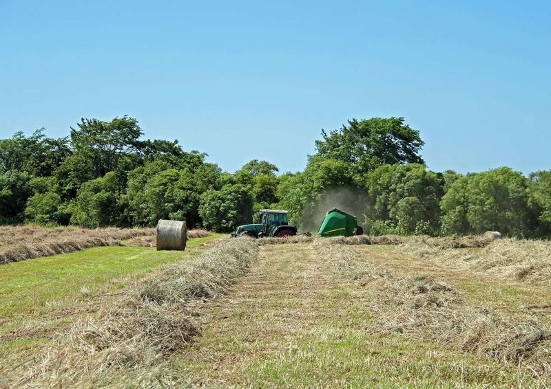 農作業‐牧草収穫4