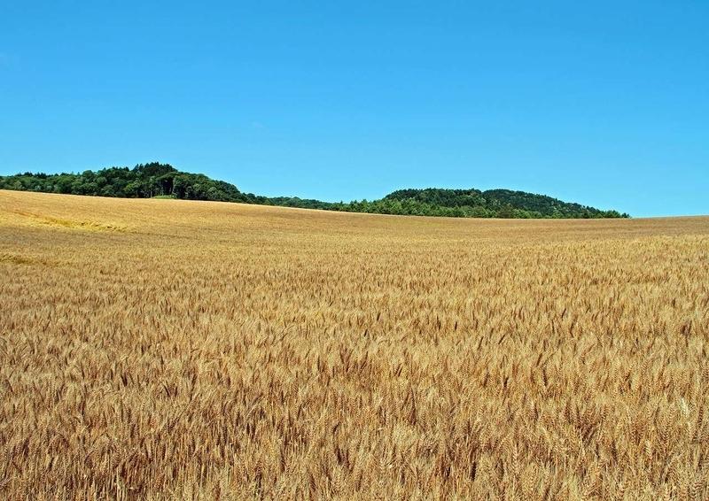 農村風景5-牧草
