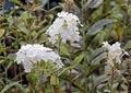野に咲く花5
