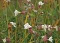 野に咲く花4