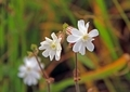 野に咲く花1