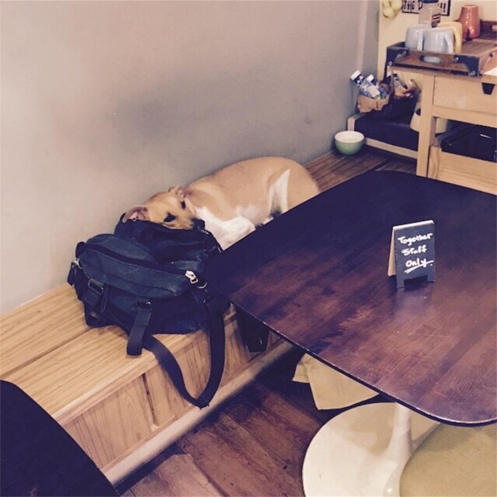 台湾ccafeの犬