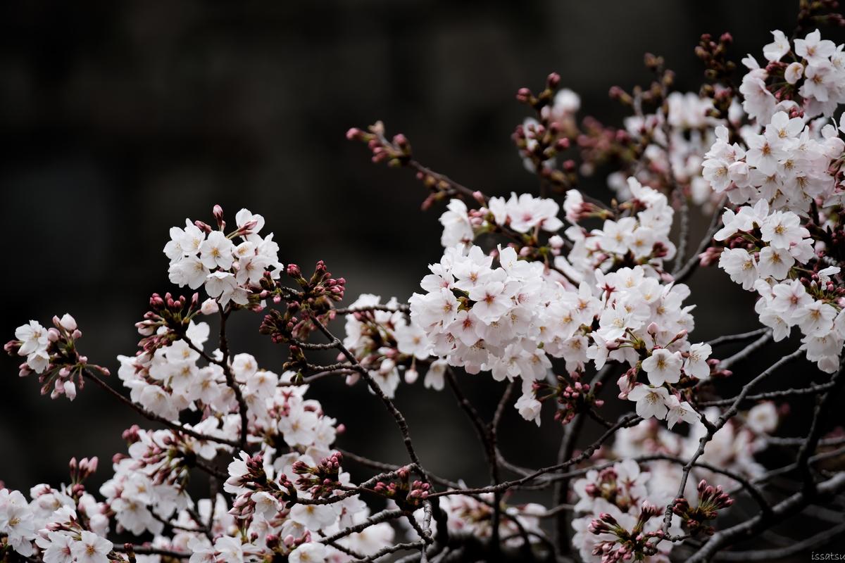 【フォトウォーク】丸の内&千鳥ヶ淵【ひとり】