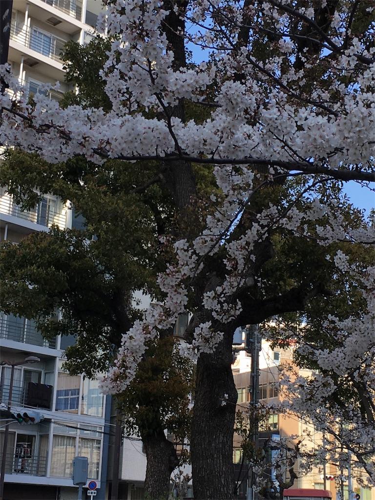 f:id:issiki-ikka-net:20180327220118j:image