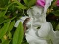[110502][柏の葉公園]カナヘビ