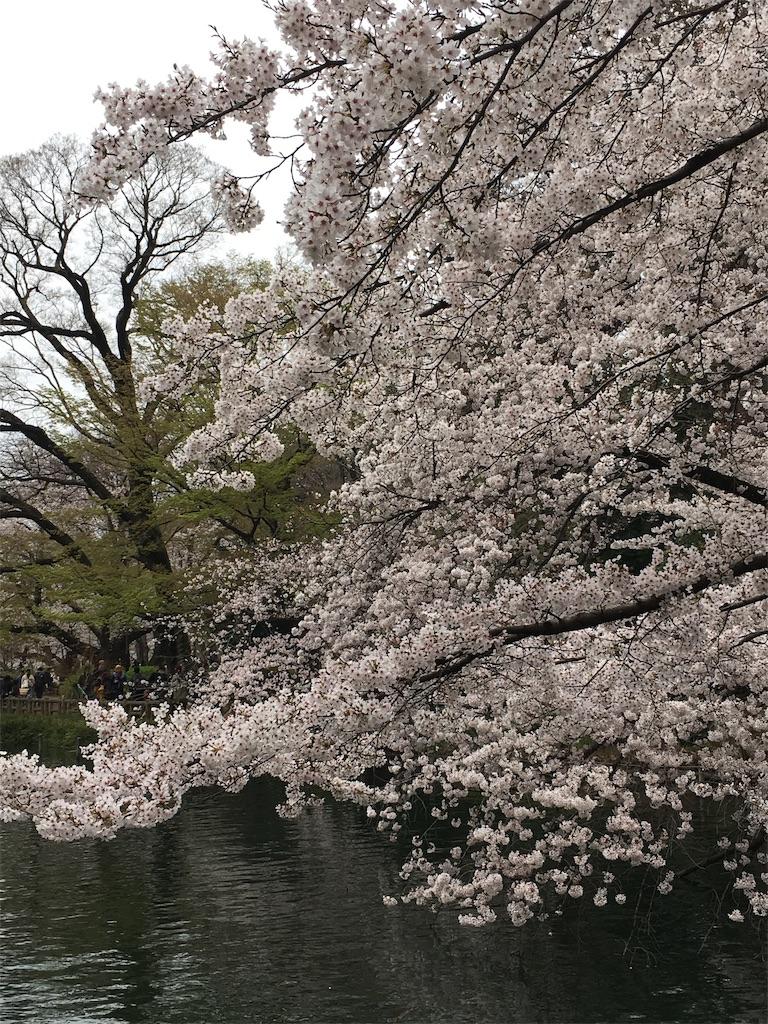 f:id:itabashikaigosyasien:20190331212225j:image