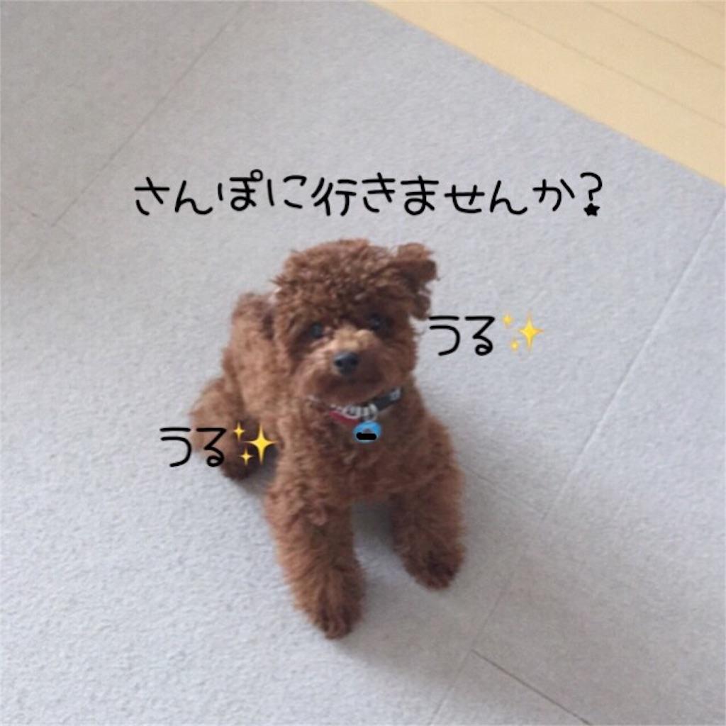f:id:itachi-bamboo:20170127203345j:image