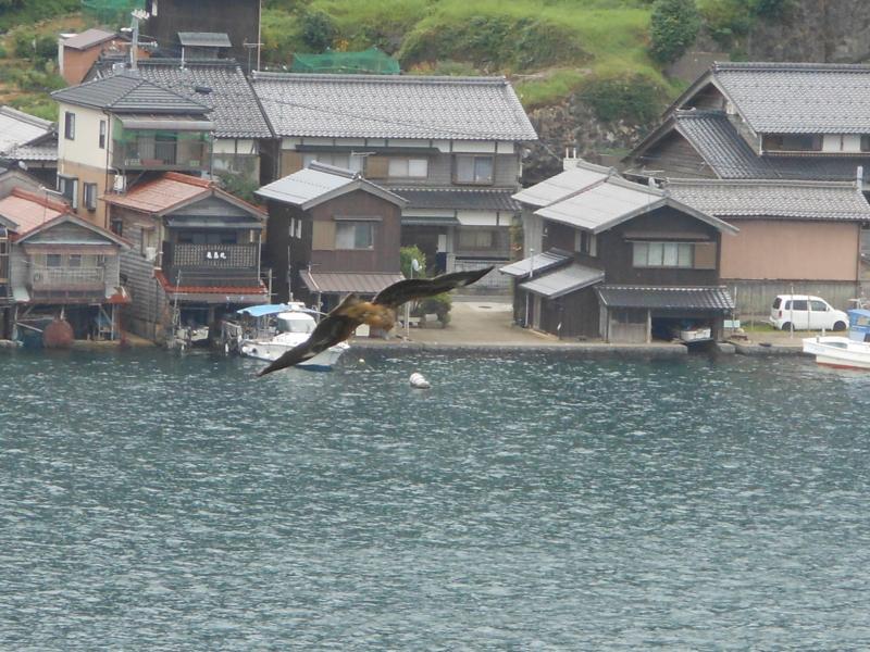 トンビが舞う伊根の舟屋の風景(2016/9/5 丹後旅)