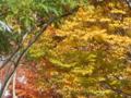 11月17日 散歩道の紅葉(伊丹駄六川)