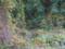 11月23日 つる草も紅葉 (伊丹 猪名川)