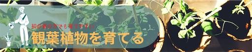 観葉植物サンスベリアのおすすめについて