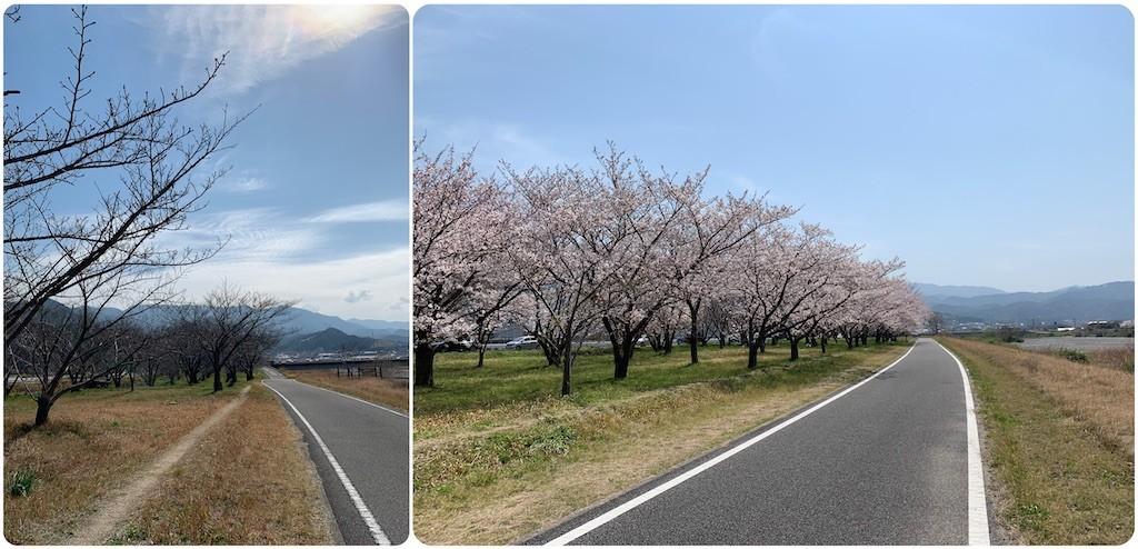f:id:itiharu:20210331145848j:image