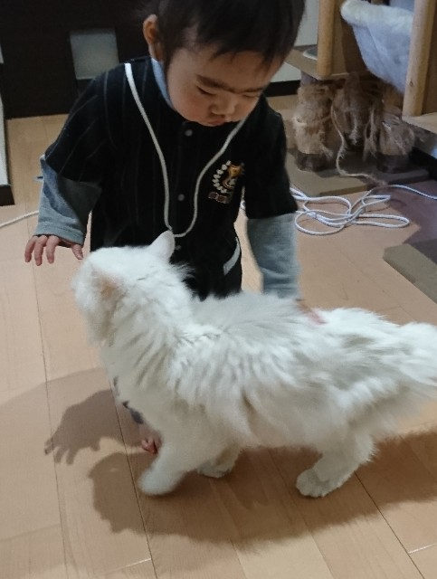f:id:itochima:20210118123743j:image