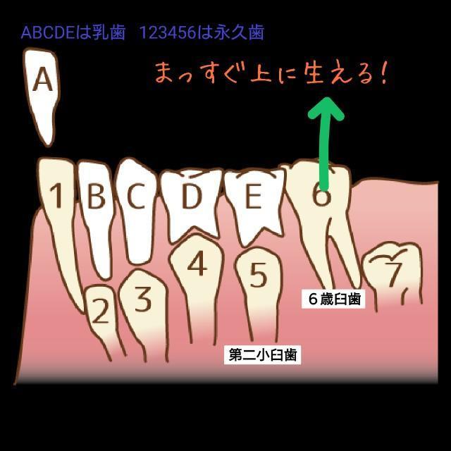f:id:itochima:20210524080753j:image
