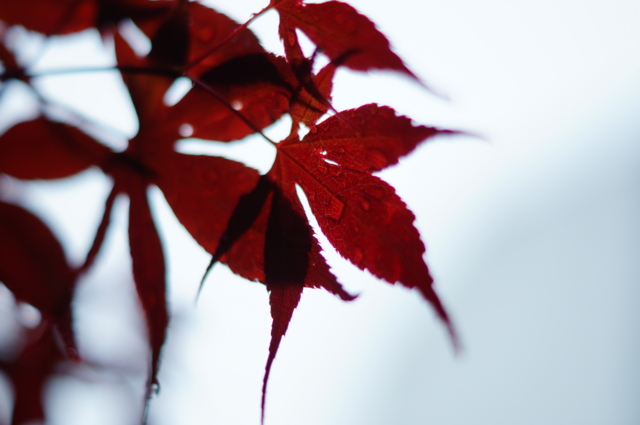 f:id:itokoichi:20130511115624j:image:w320