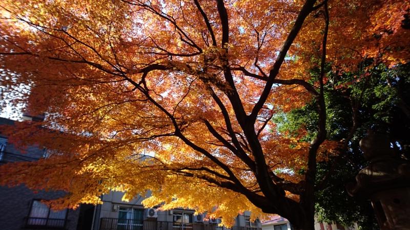 f:id:itokoichi:20151212113315j:image