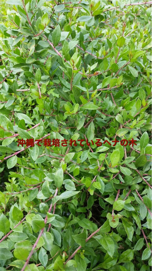 f:id:itomakimaki523:20170208151102j:image