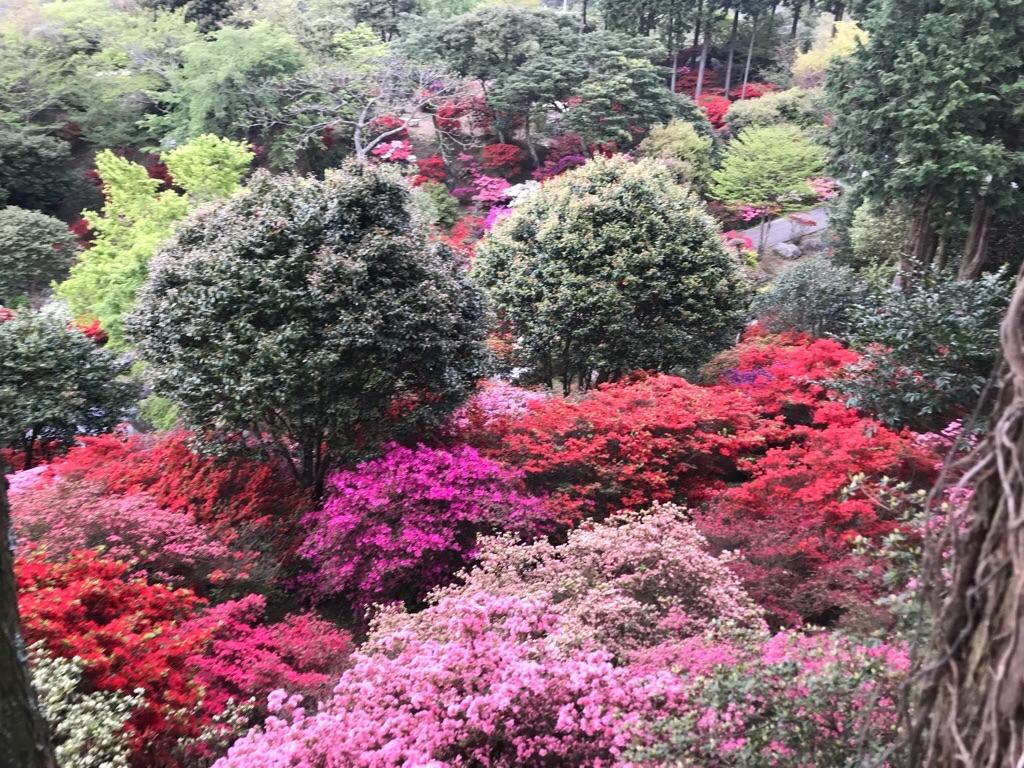 f:id:itoshima55:20180417105927j:image