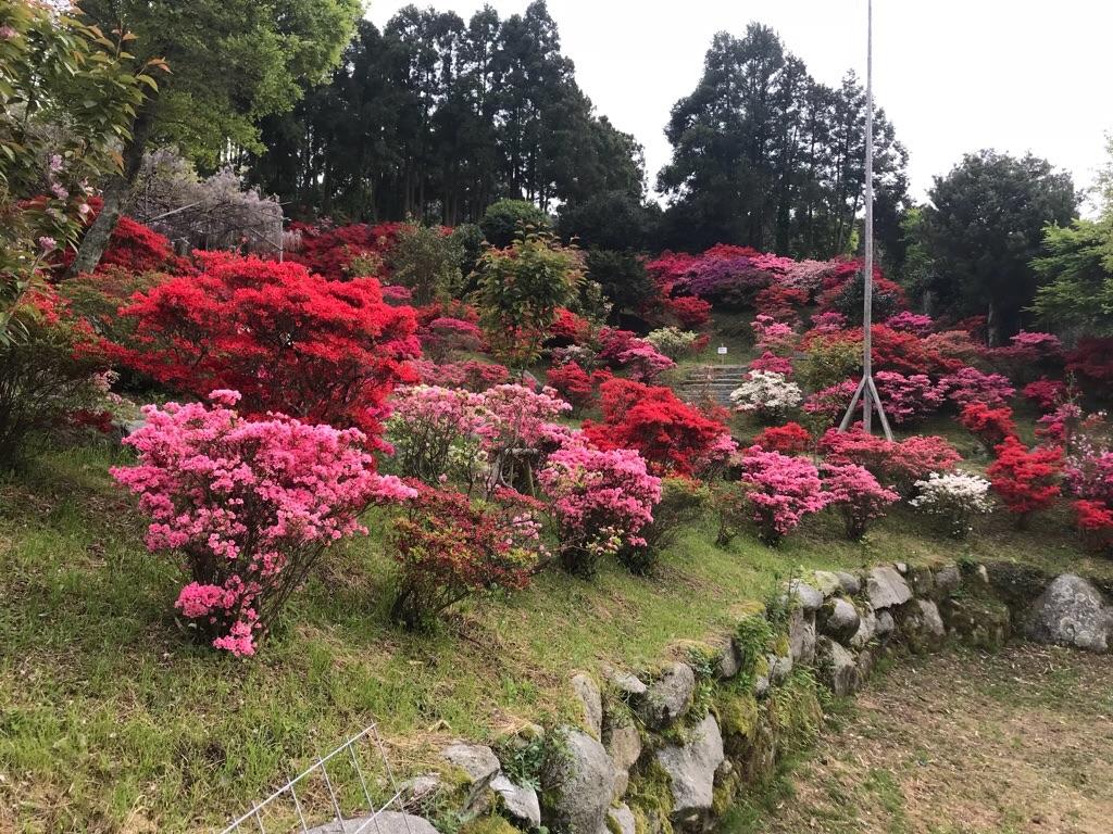f:id:itoshima55:20180417110153j:image