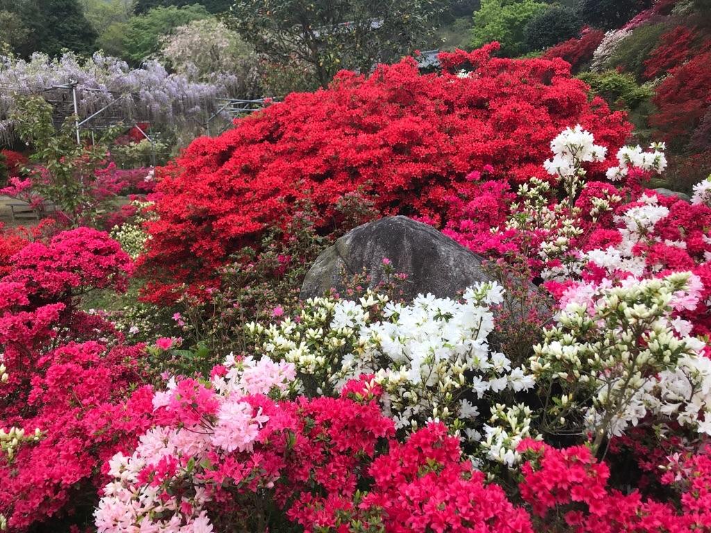 f:id:itoshima55:20180417110311j:image