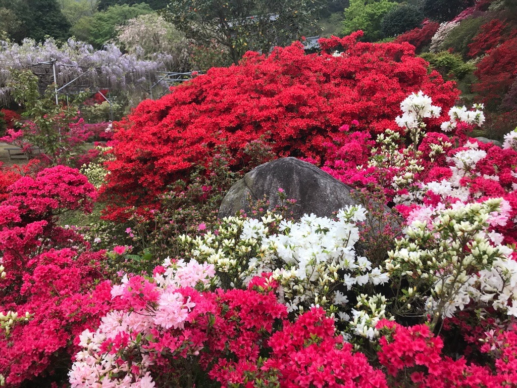 f:id:itoshima55:20180417214545j:image