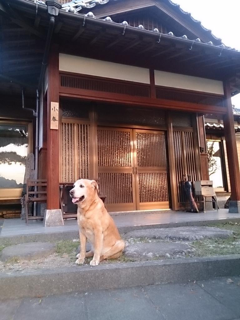 f:id:itoshimakoharu:20170215111028j:plain