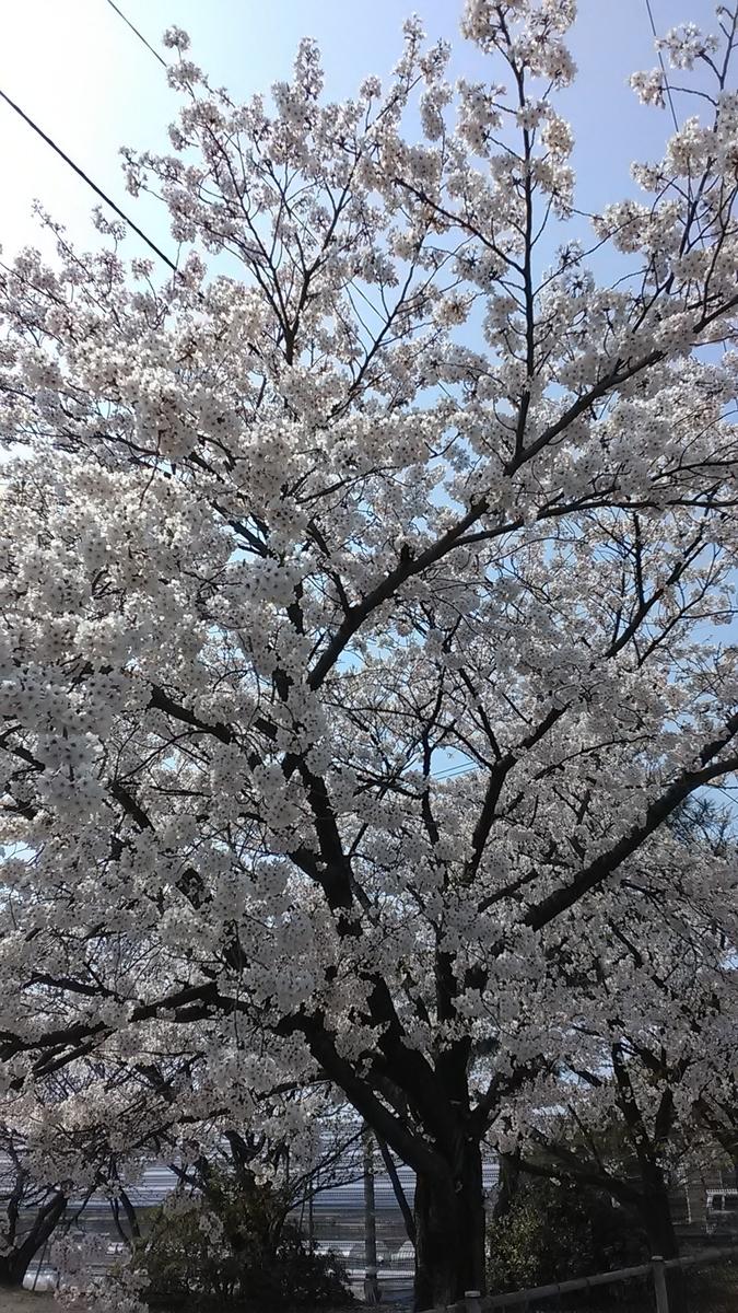 f:id:itotetsu241046:20200409142506j:plain
