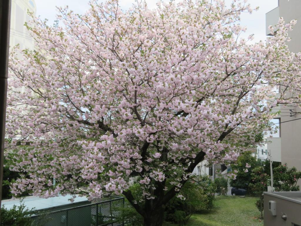 f:id:itsukofumiaki:20170418201957j:plain