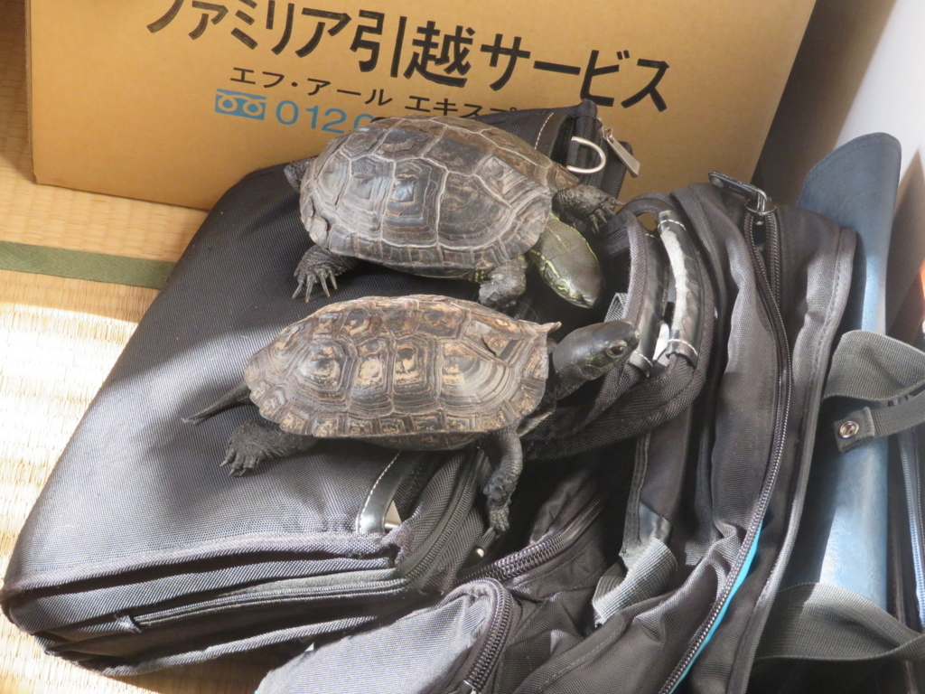 f:id:itsukofumiaki:20171214175129j:plain