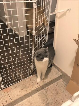 ペットゲートと通り抜けようとする猫