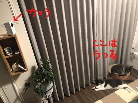 f:id:itsukorosato:20201107185247j:plain