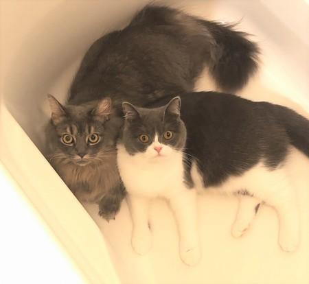 湯船の中の猫