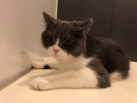 風呂蓋の上でくつろぐ猫